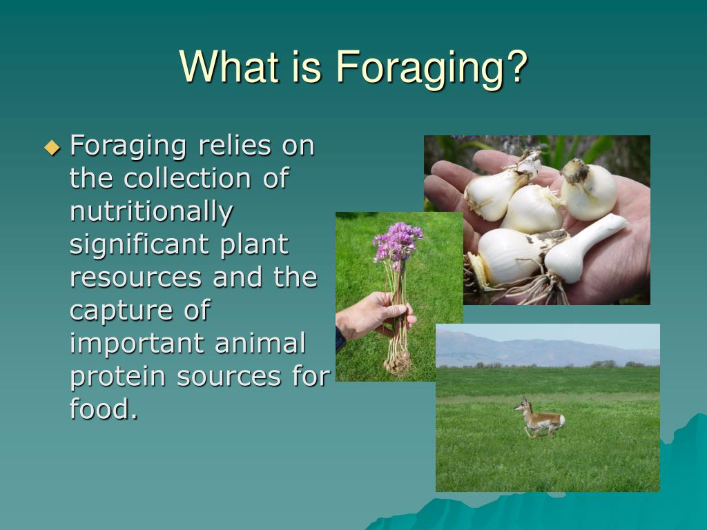 What is Foraging?