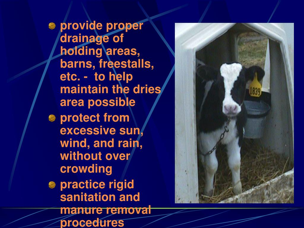 provide proper drainage of holding areas, barns, freestalls, etc. -  to help maintain the dries area possible