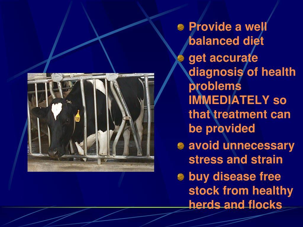Provide a well balanced diet