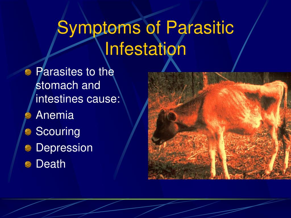 Symptoms of Parasitic Infestation