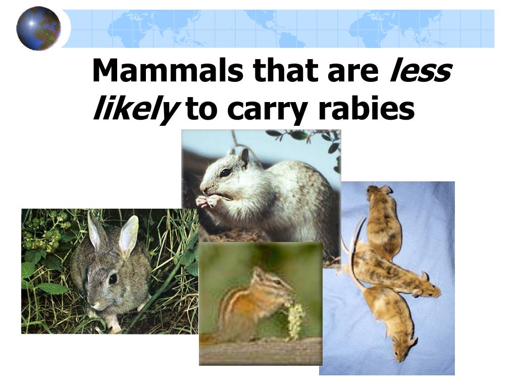Mammals that are
