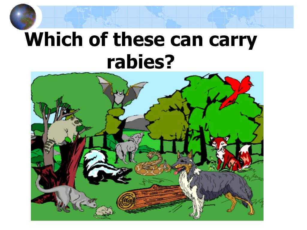 Which of these can carry rabies?