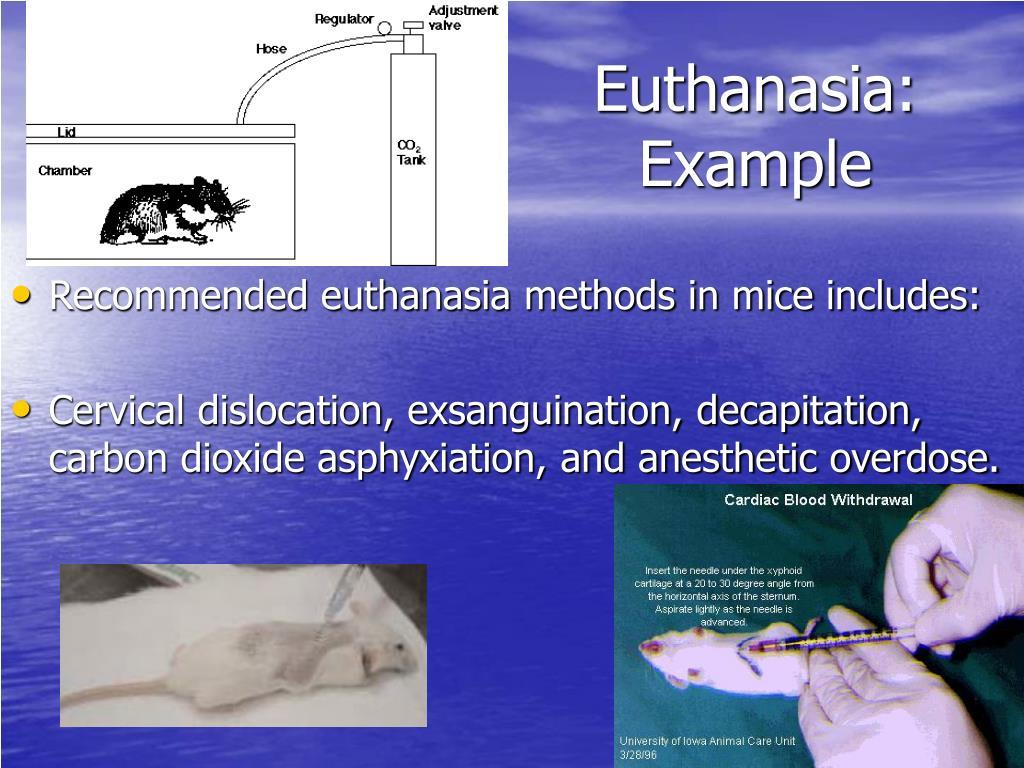 Euthanasia: Example
