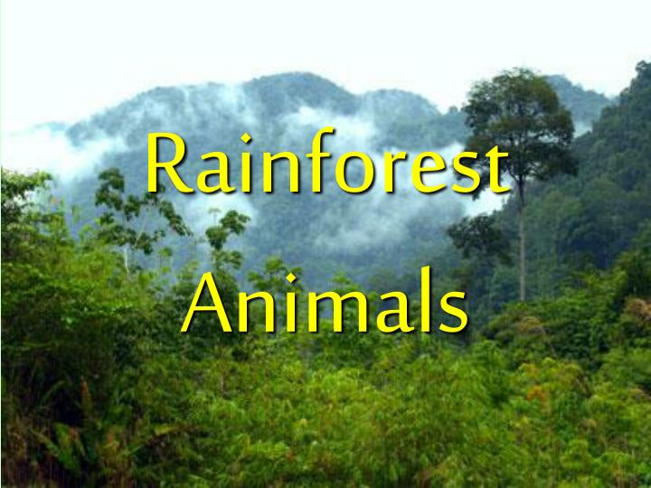 Rainforest animals l.jpg