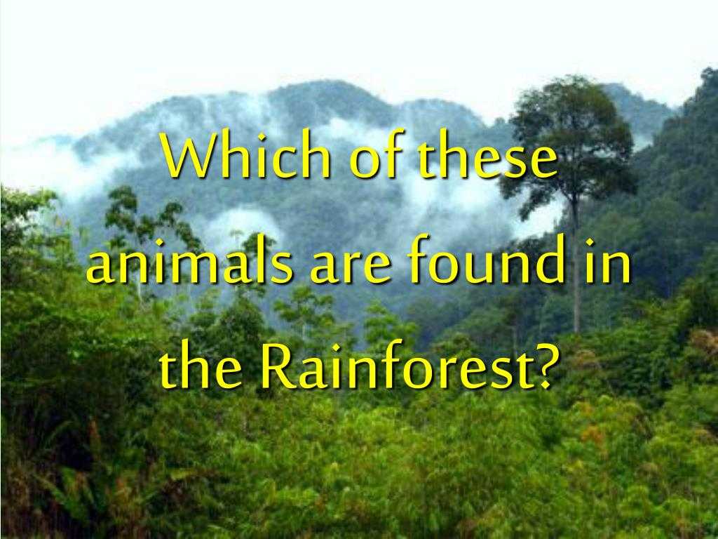 Which of these animals are found in the Rainforest?
