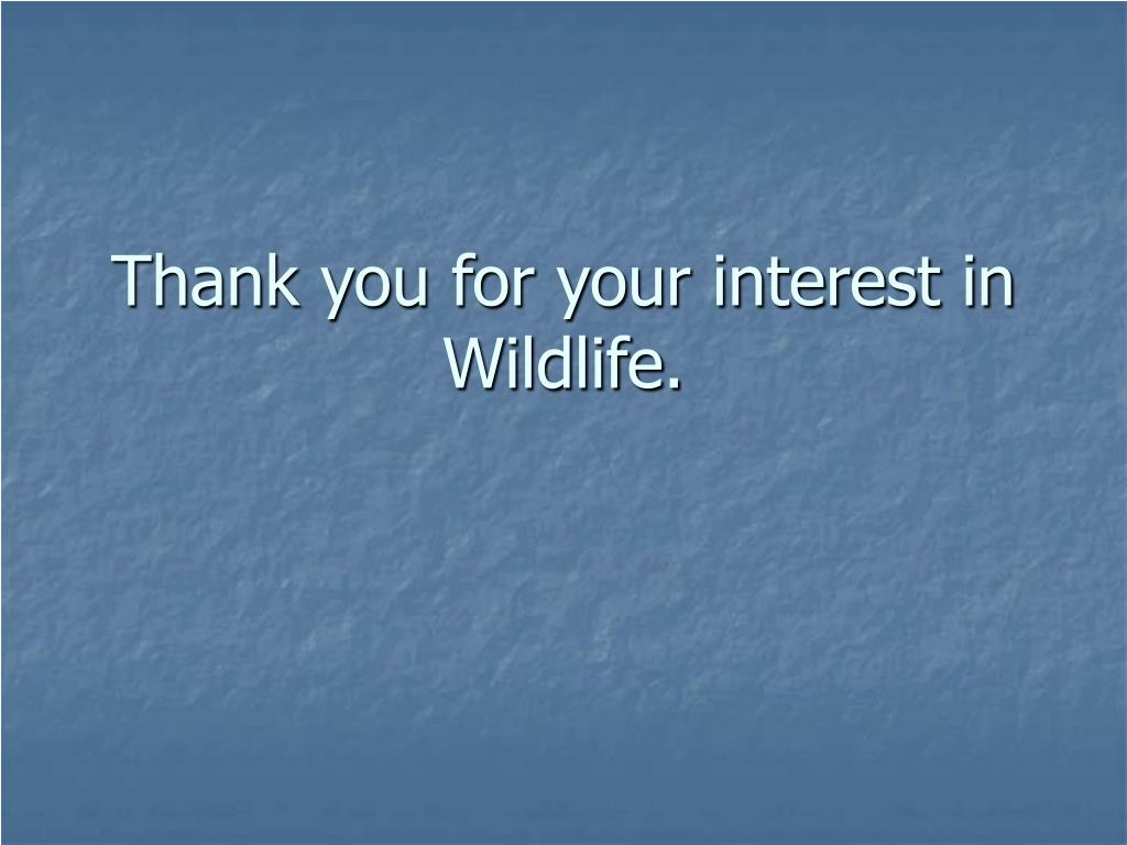 Thank you for your interest in Wildlife.