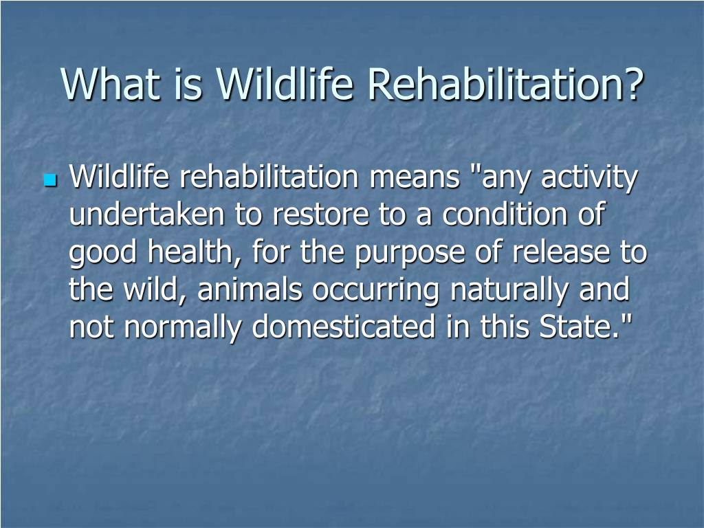 What is Wildlife Rehabilitation?