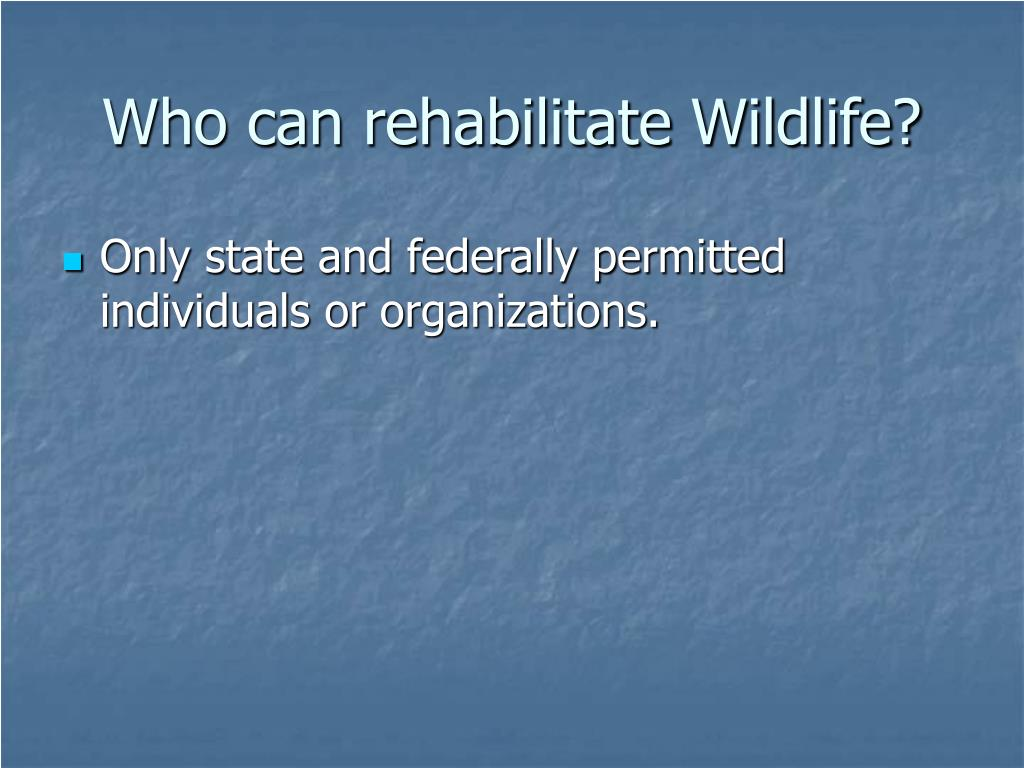 Who can rehabilitate Wildlife?
