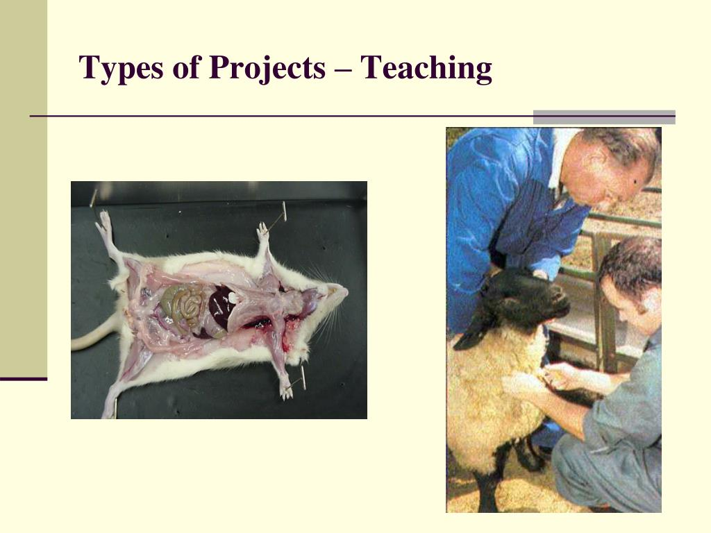 Types of Projects – Teaching