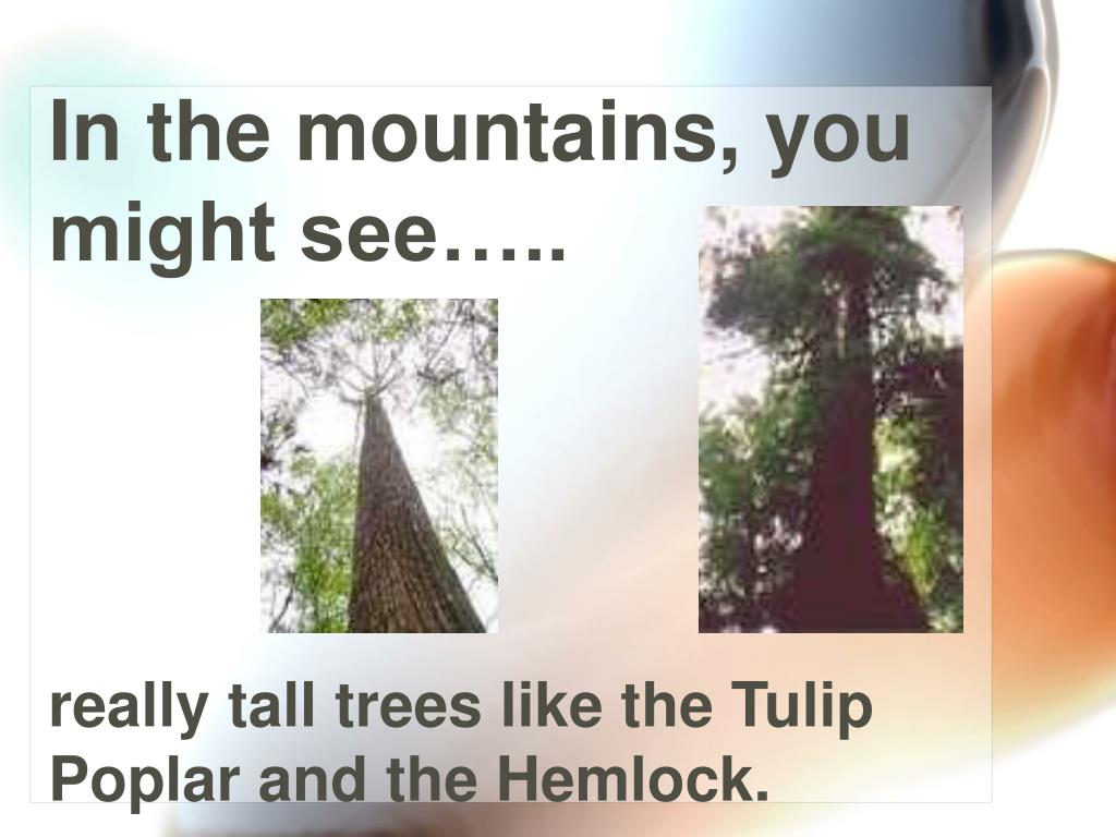In the mountains, you might see…..