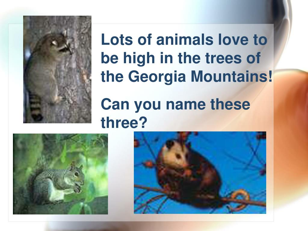 Lots of animals love to be high in the trees of the Georgia Mountains!