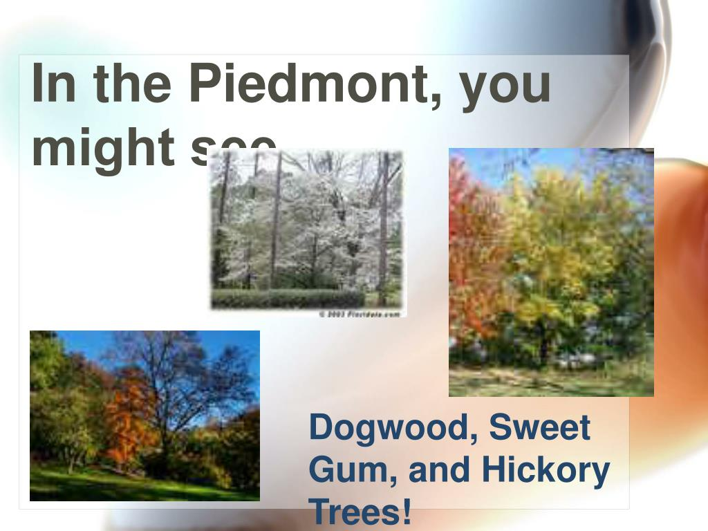In the Piedmont, you might see…..