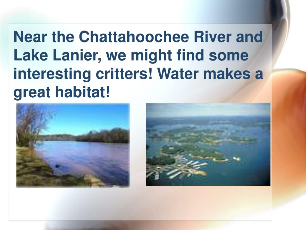 Near the Chattahoochee River and Lake Lanier, we might find some interesting critters! Water makes a great habitat!