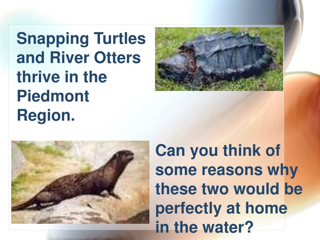 Snapping Turtles and River Otters thrive in the Piedmont Region.
