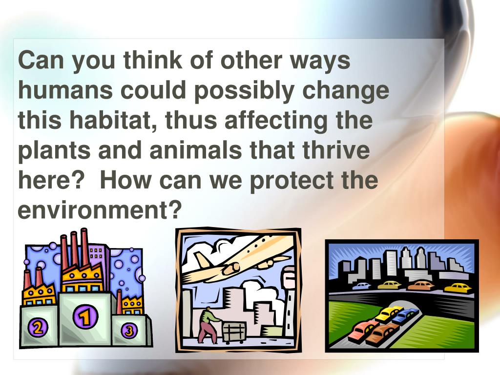 Can you think of other ways humans could possibly change this habitat, thus affecting the plants and animals that thrive here?  How can we protect the environment?
