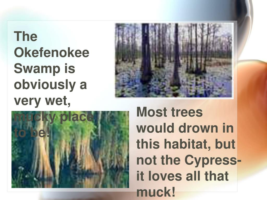 The Okefenokee Swamp is obviously a very wet, mucky place to be!
