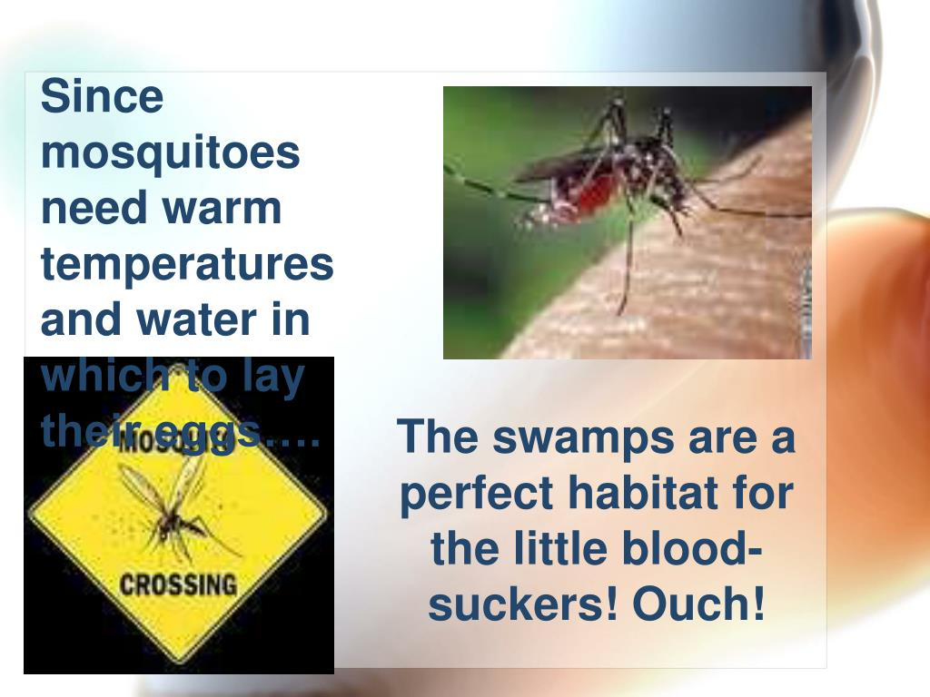 Since mosquitoes need warm temperatures and water in which to lay their eggs….