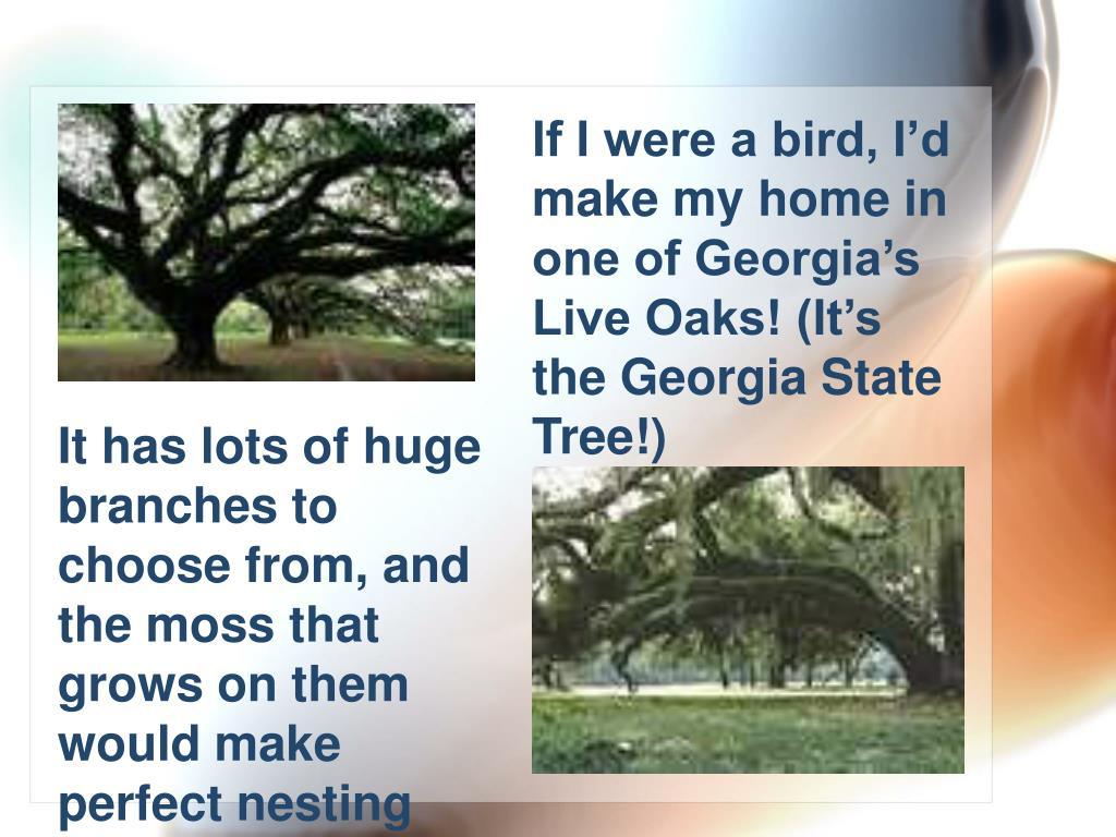 If I were a bird, I'd make my home in one of Georgia's Live Oaks! (It's the Georgia State Tree!)