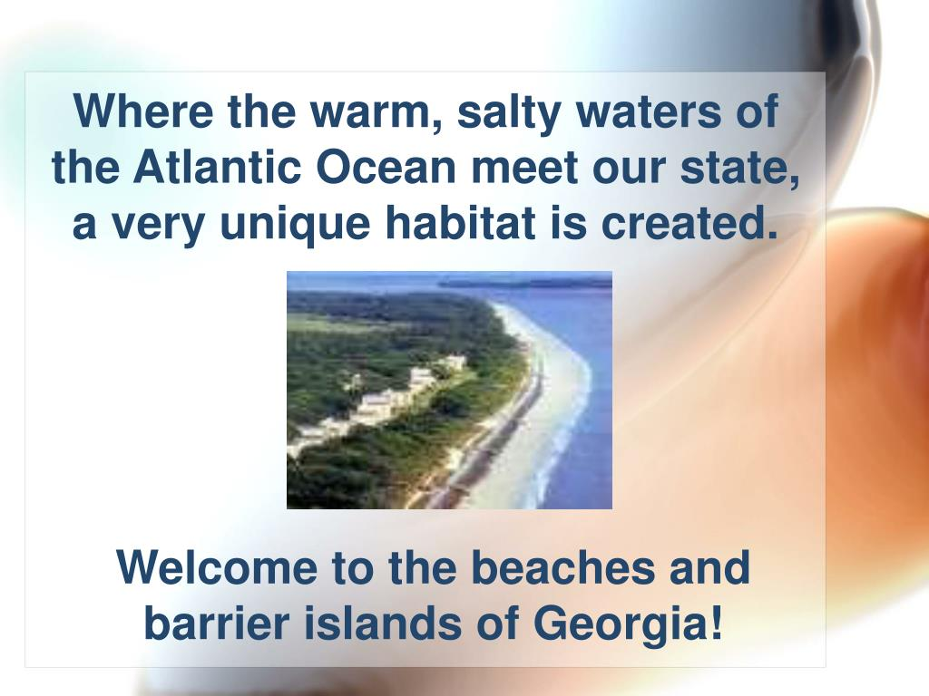 Where the warm, salty waters of the Atlantic Ocean meet our state,  a very unique habitat is created.