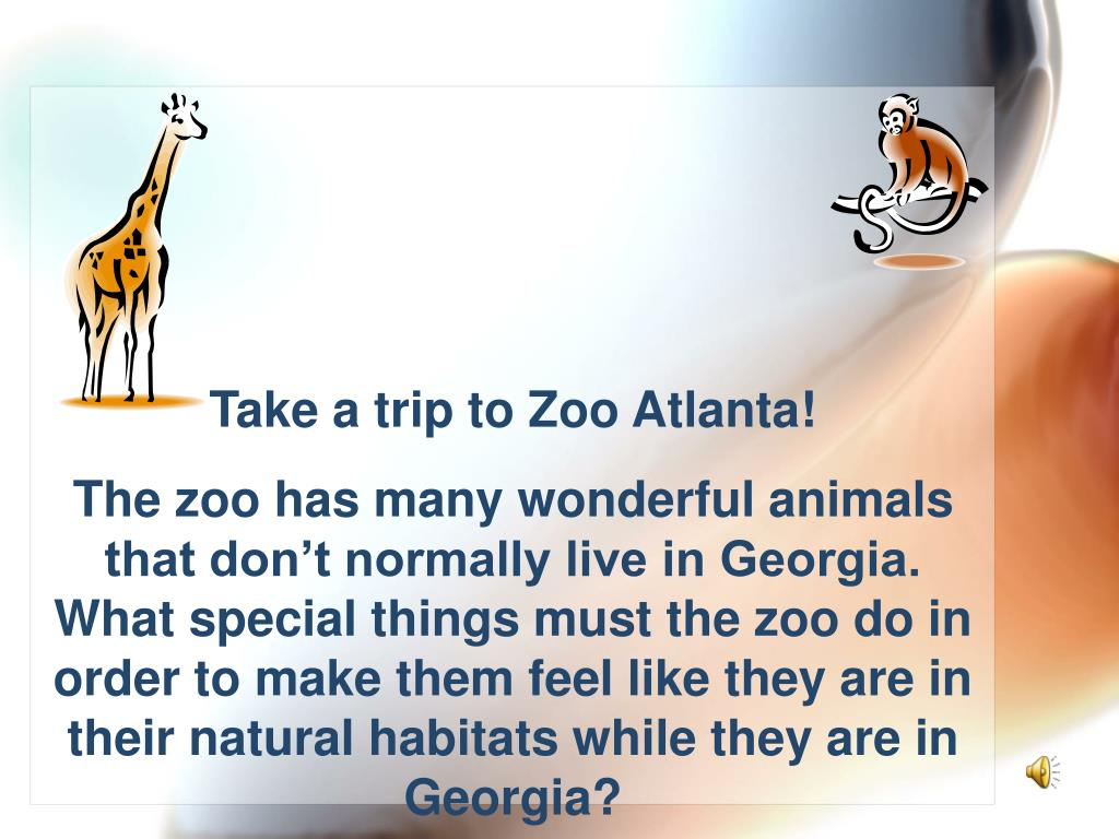 Take a trip to Zoo Atlanta!