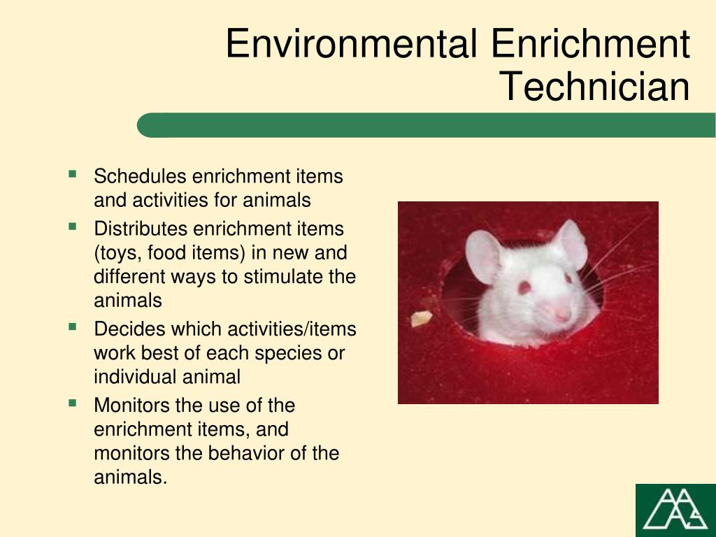 Schedules enrichment items and activities for animals