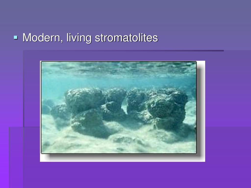 Modern, living stromatolites