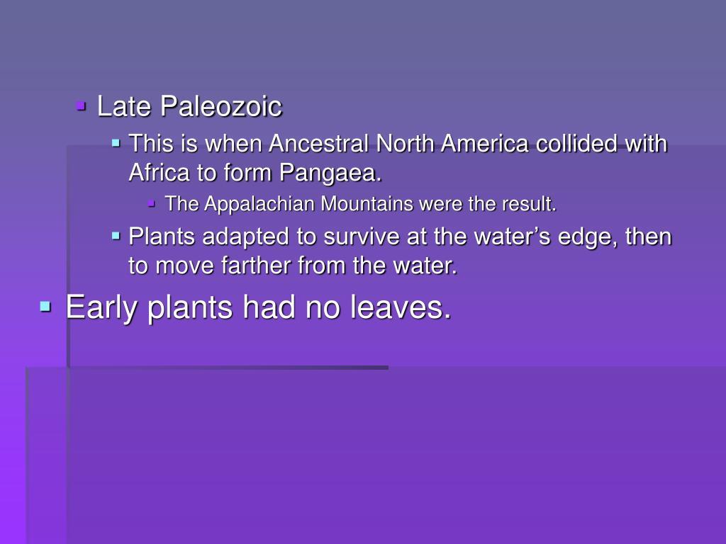 Late Paleozoic