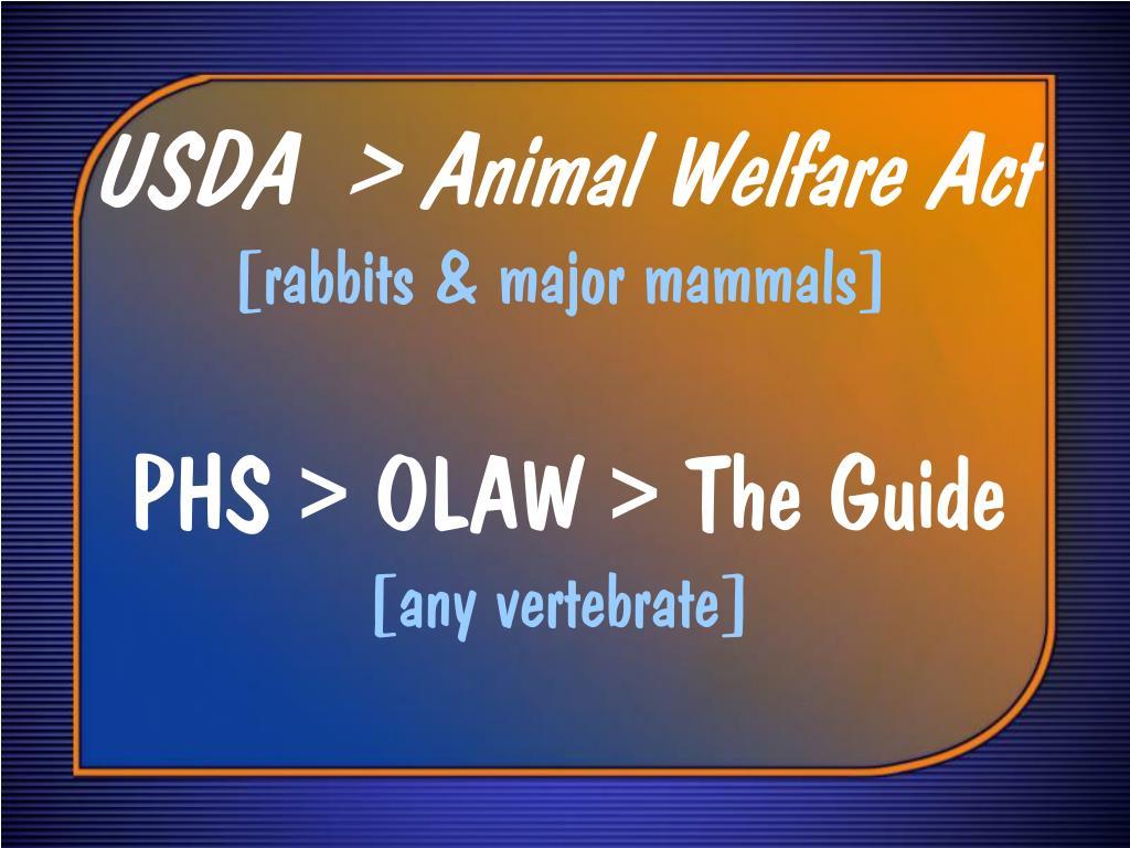 USDA  > Animal Welfare Act