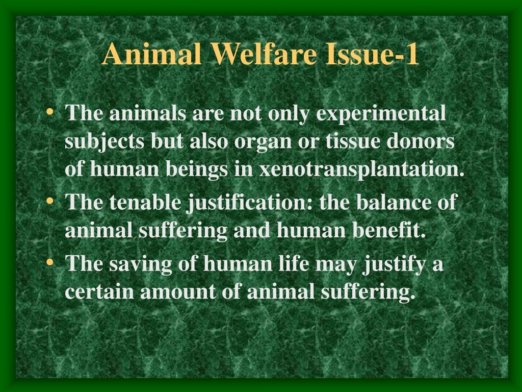 animal welfare 1 The grounding ideals of one welfare will help veterinarians foster not only animal welfare, but human and societal well being we hope the resources on this portal will engage and challenge you, and help scaffold your professional development, enhancing your study of animal welfare and ethics.