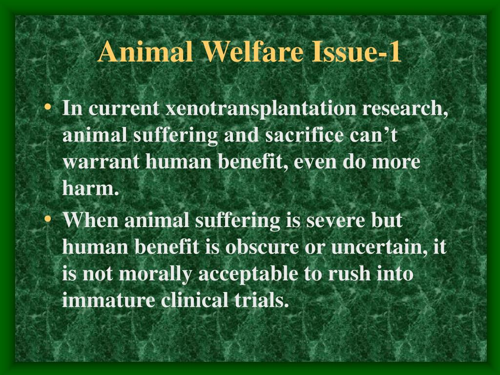 Animal Welfare Issue-1