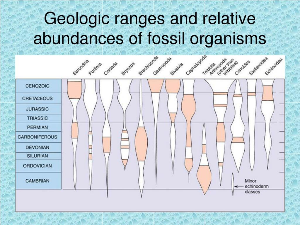 Geologic ranges and relative abundances of fossil organisms