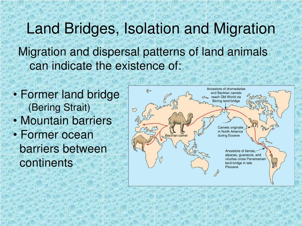 Land Bridges, Isolation and Migration