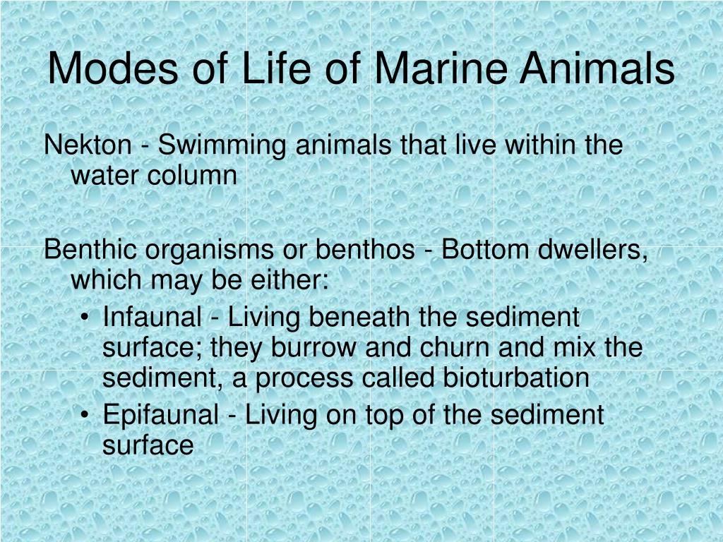Modes of Life of Marine Animals