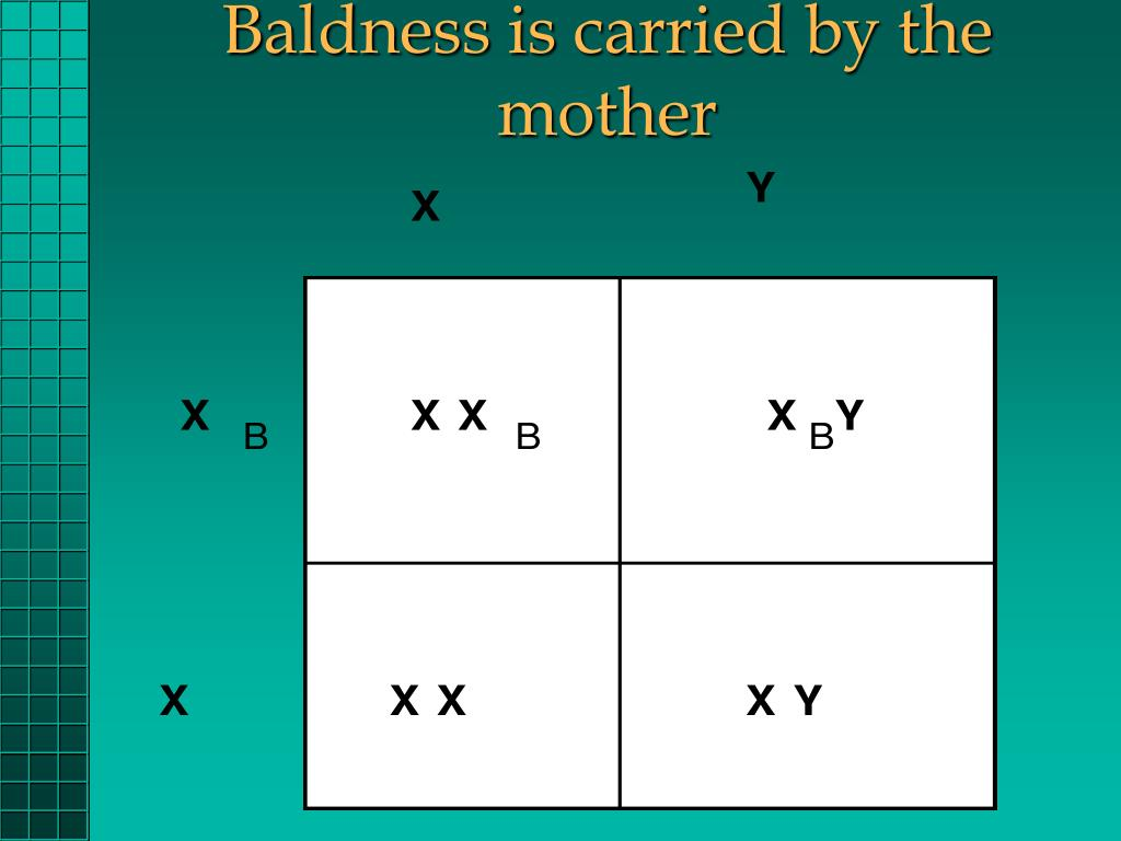 Baldness is carried by the mother