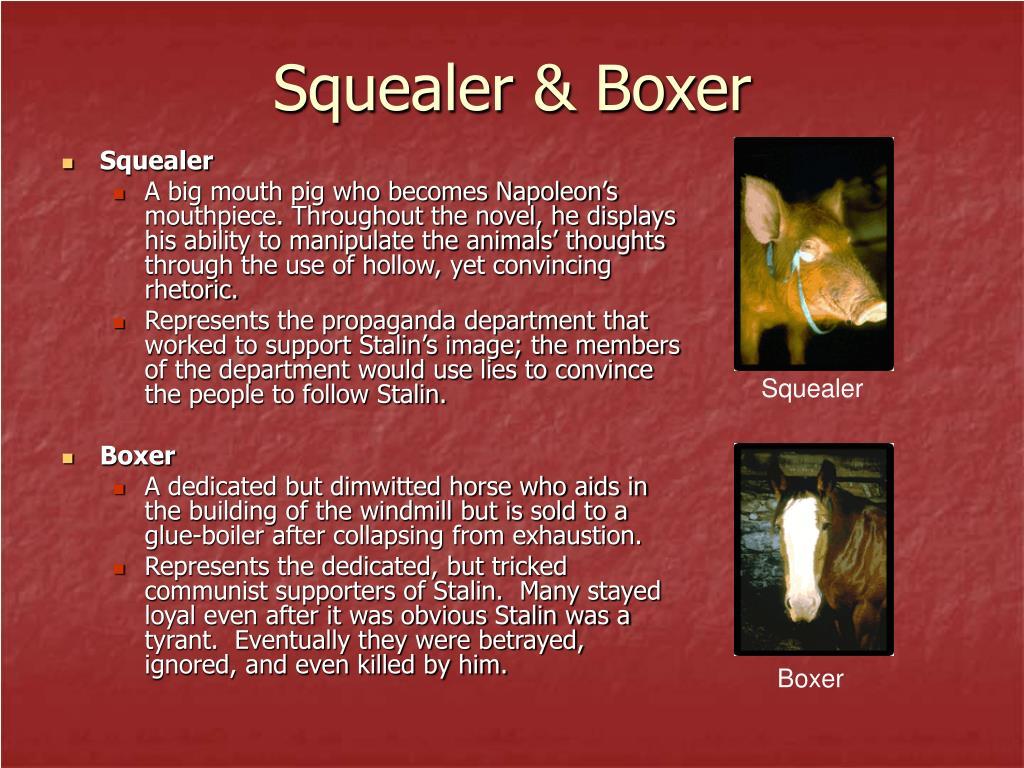 Squealer & Boxer