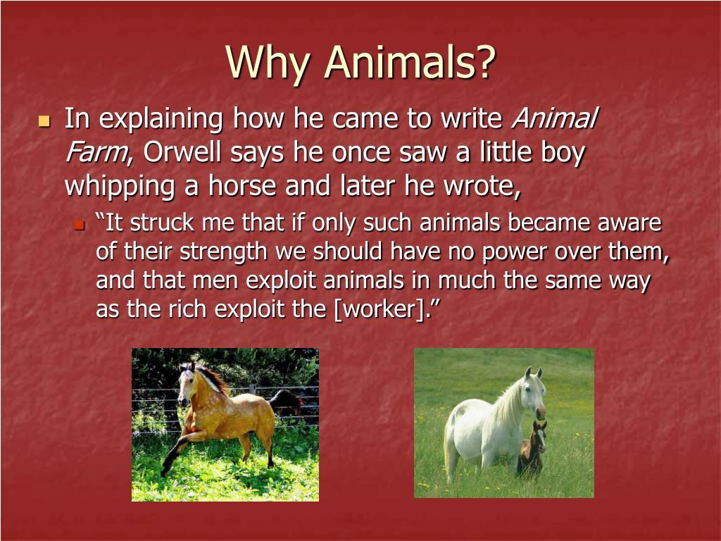 Why Animals?