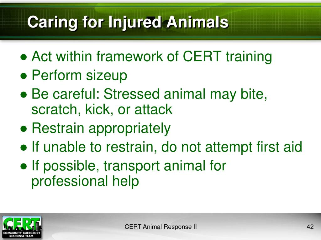 Caring for Injured Animals