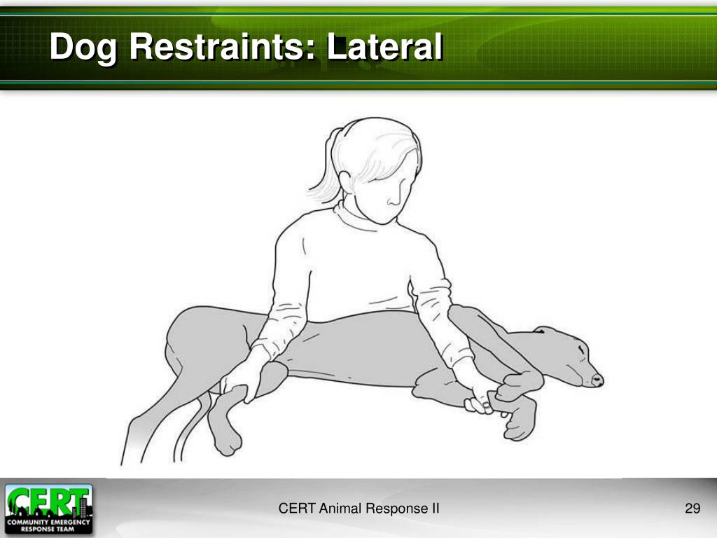 Dog Restraints: Lateral