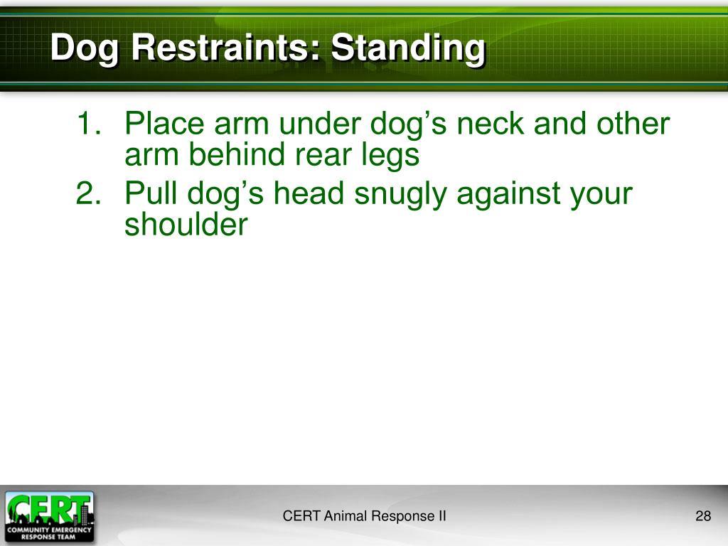 Dog Restraints: Standing