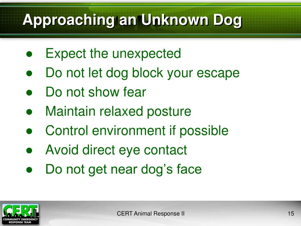 Approaching an Unknown Dog