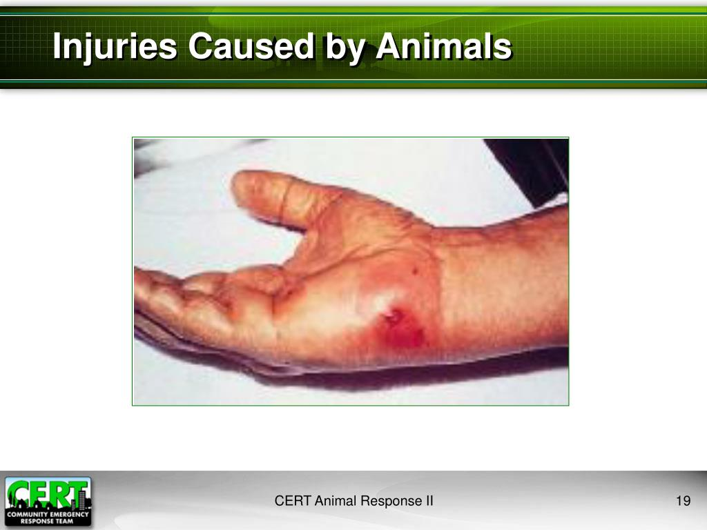 Injuries Caused by Animals