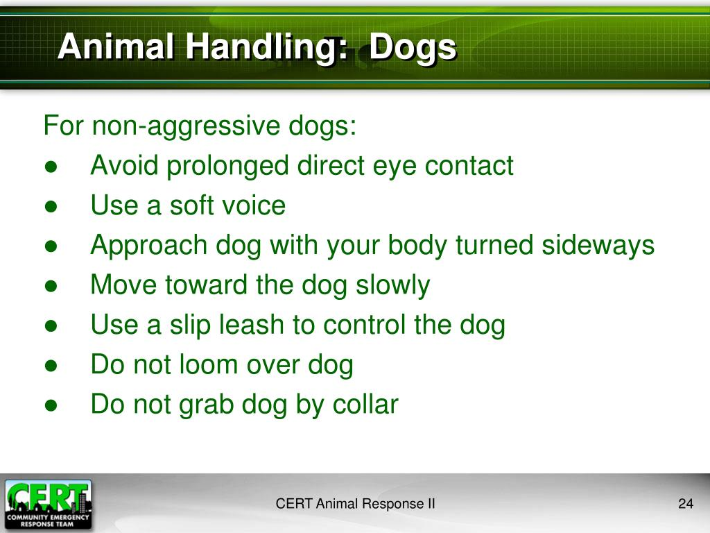 Animal Handling:  Dogs