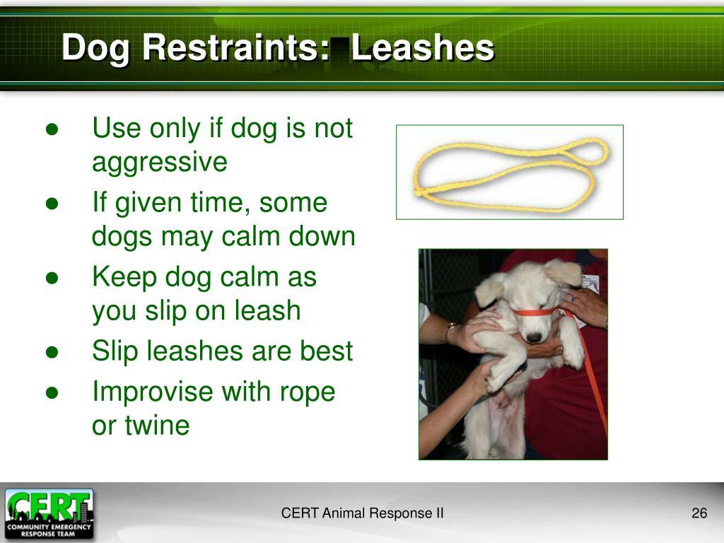 Dog Restraints:  Leashes