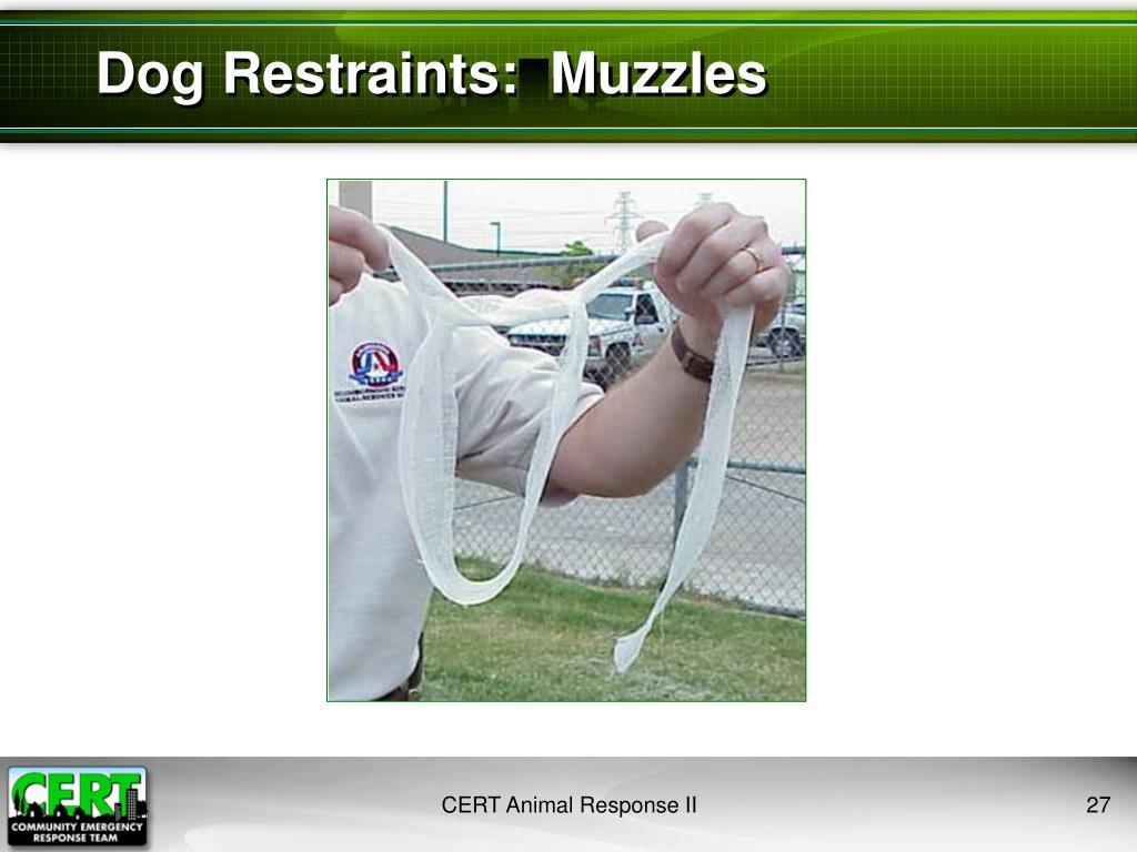Dog Restraints:  Muzzles