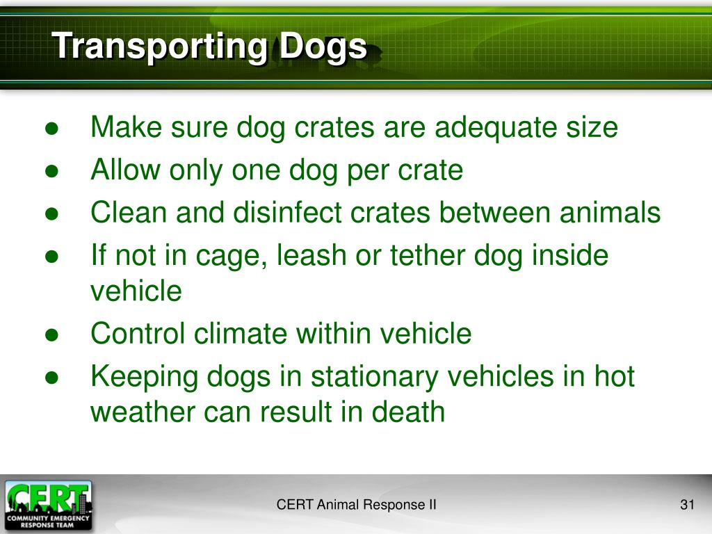 Transporting Dogs