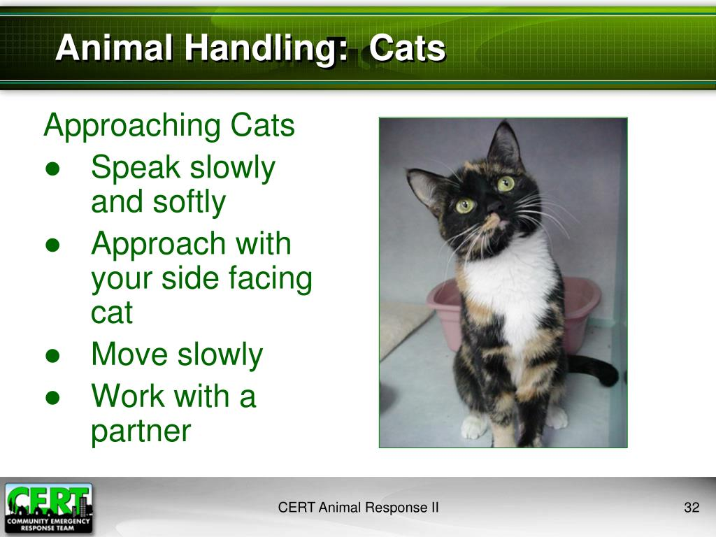 Animal Handling:  Cats