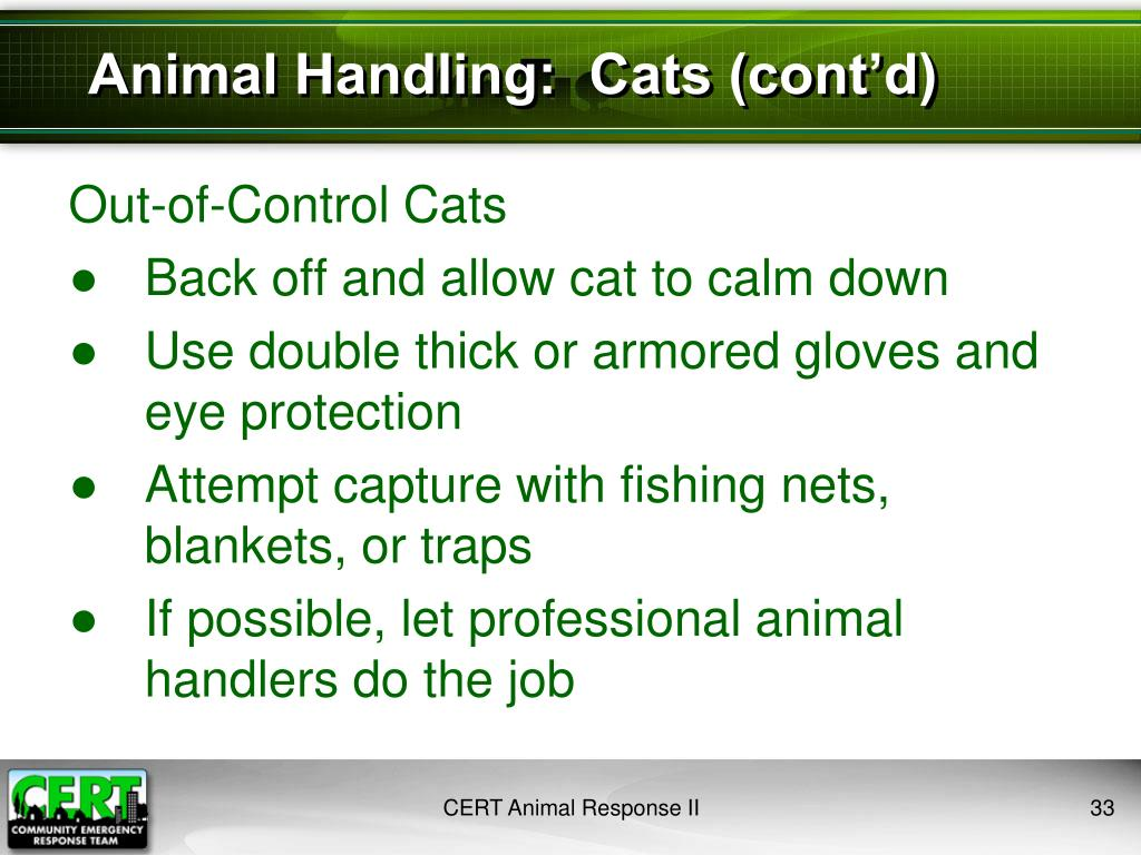 Animal Handling:  Cats (cont'd)