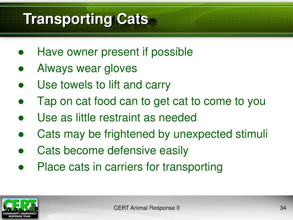 Transporting Cats