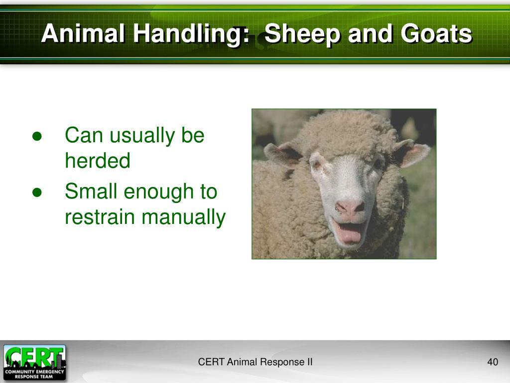 Animal Handling:  Sheep and Goats