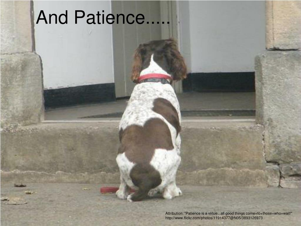 And Patience.....